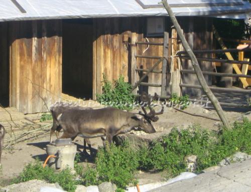 Skansen, Museo e Zoo