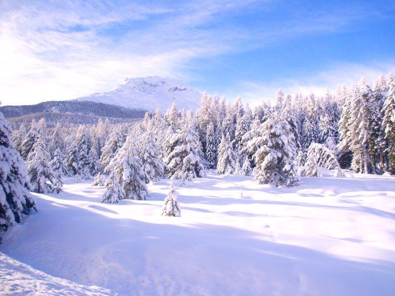 Trenino del Bernina boschi vicino Pontresina