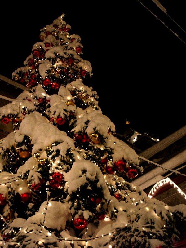 St. Moritz albero