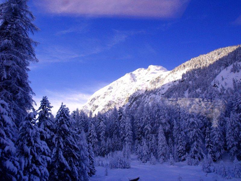 Trenino del Bernina boschi