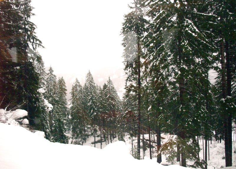 trenino foresta sulla valle di poschiavo