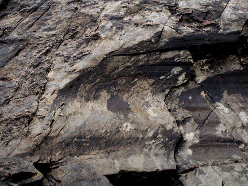 orso norvegia