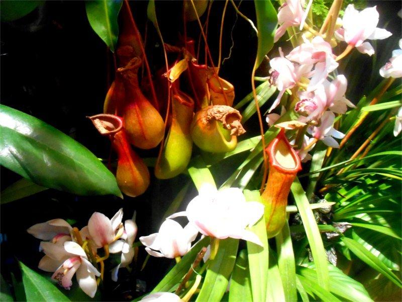 posizione orchideee Menton