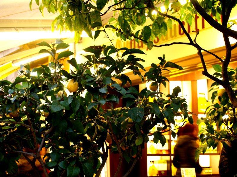 liquori al limone a Menton
