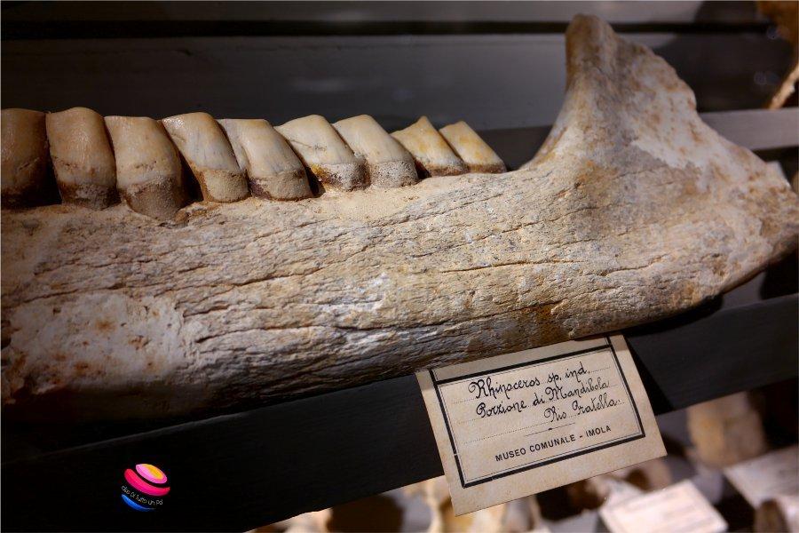 mandibola di rinoceronte