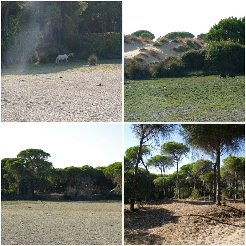 parco donana collage