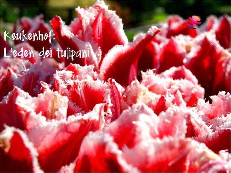 Keukenhof_eden_dei_tulipani