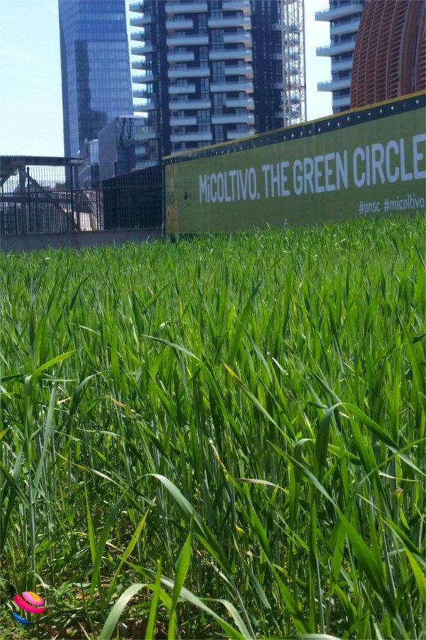 Milano cosa vedere campo di grano
