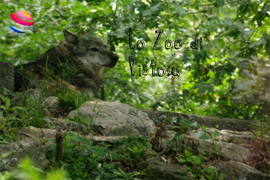 zoo_di_pistoia_lupo