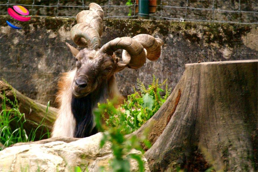 zoo di pistoia makkor