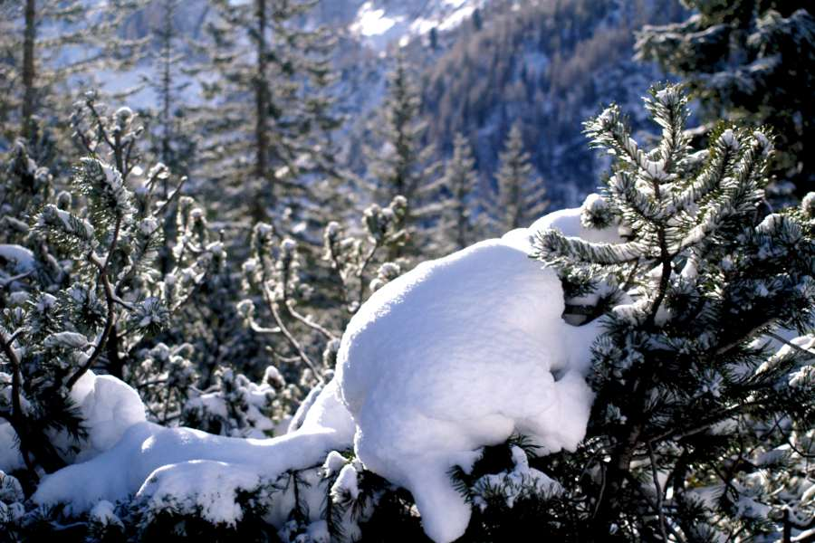 Val fiscalina la neve sui rami