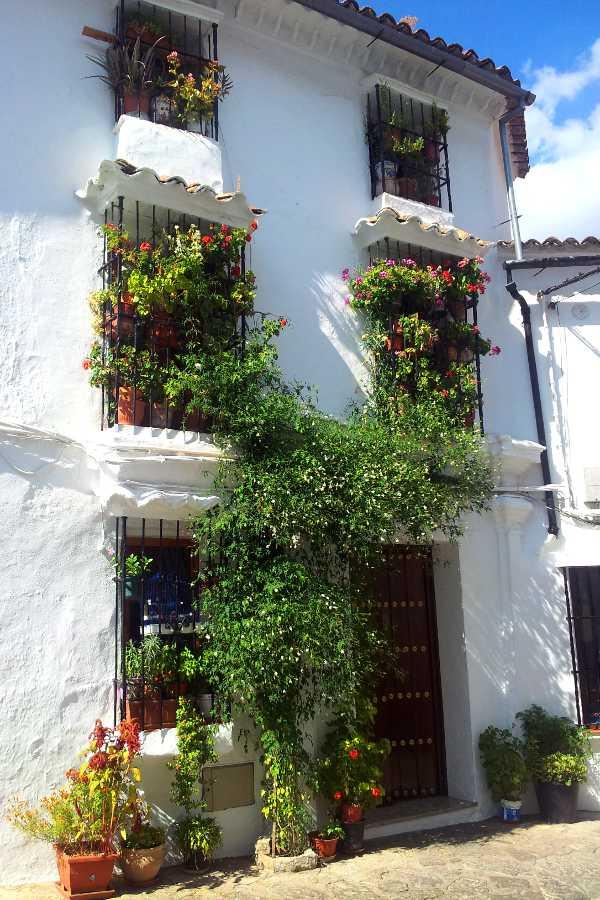 Pueblos blancos: Grazalema tralci e fiori sulle pareti