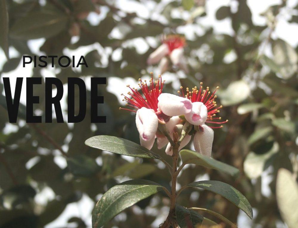 Vivai Pistoia: florovivaismo d'eccellenza