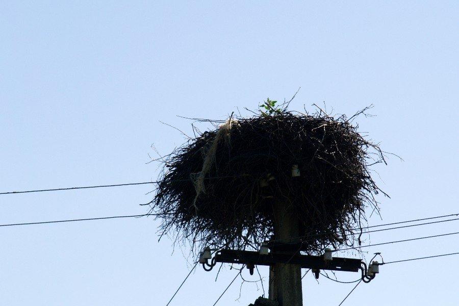 narva estonia nido di cicogna