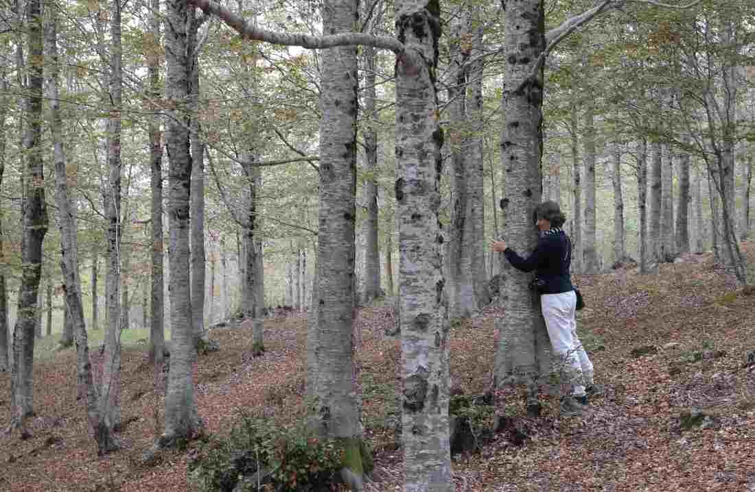 Orme nel parco abbracciare gli alberi