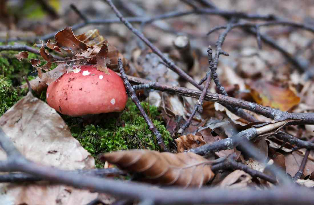 Orme nel parco fungo