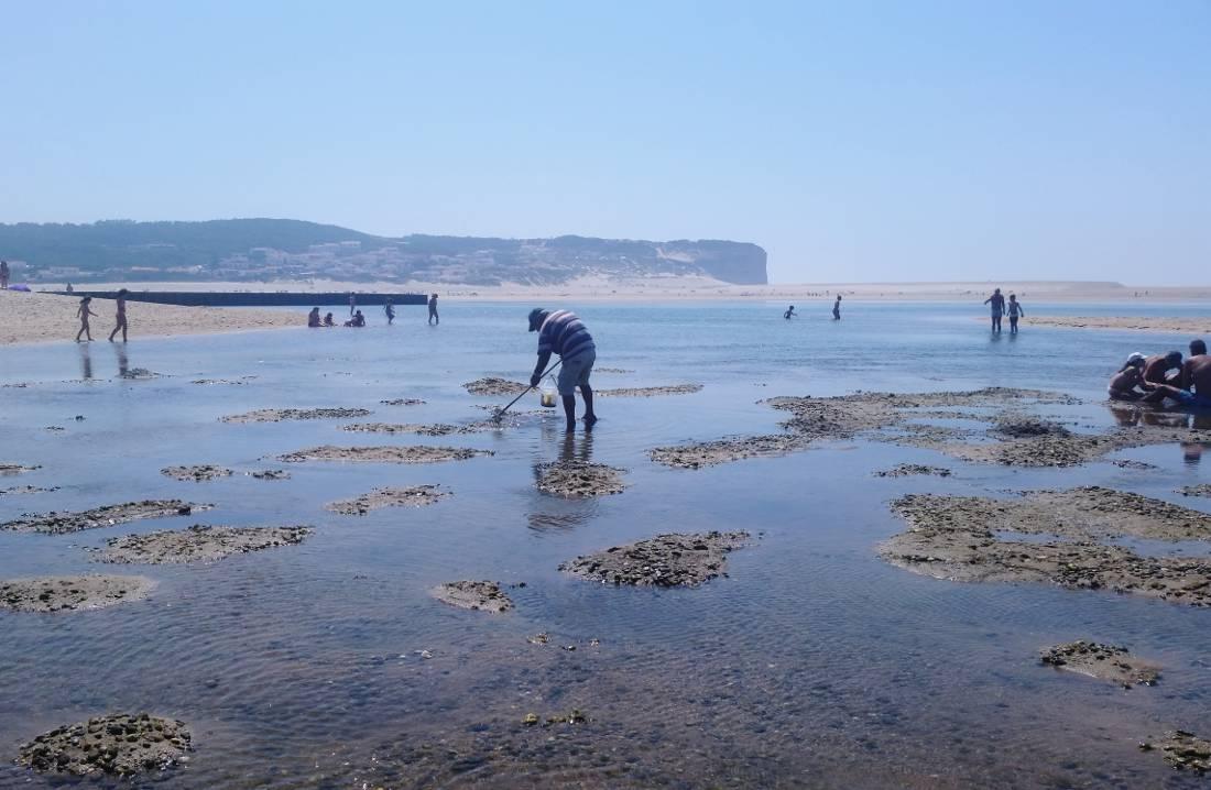 oporto lisbona lago di obidos con bassa marea