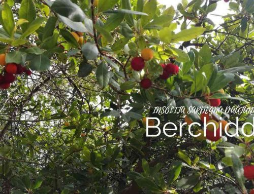 Berchidda: di presepi, di trekking, di enogastronomia e di Matrimoni