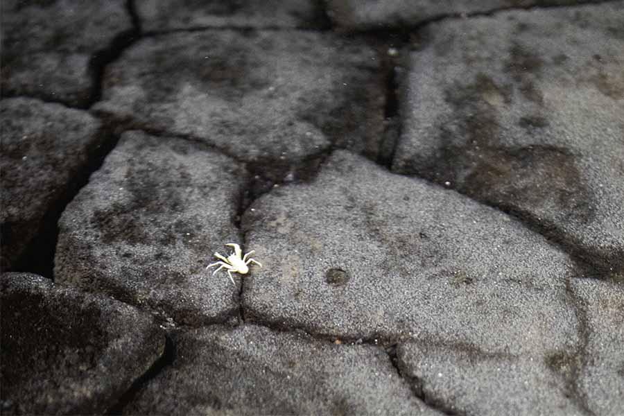 Lanzarote cosa vedere granchio albino a Jameos del Agua